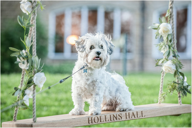 Bridal pooch wedding party. Dogs at weddings blog 008