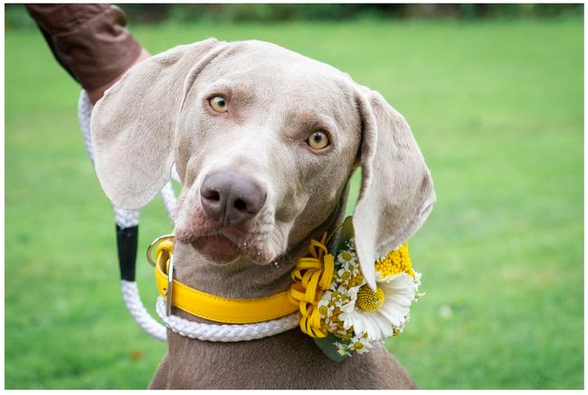 doggy bridal corsage. Dogs at weddings blog 008