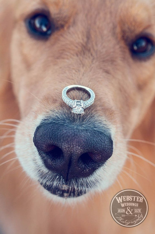 Dog proposal. Dogs at weddings blog 008