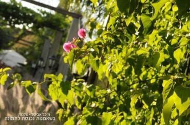 גן אירועים באווירה כפרית