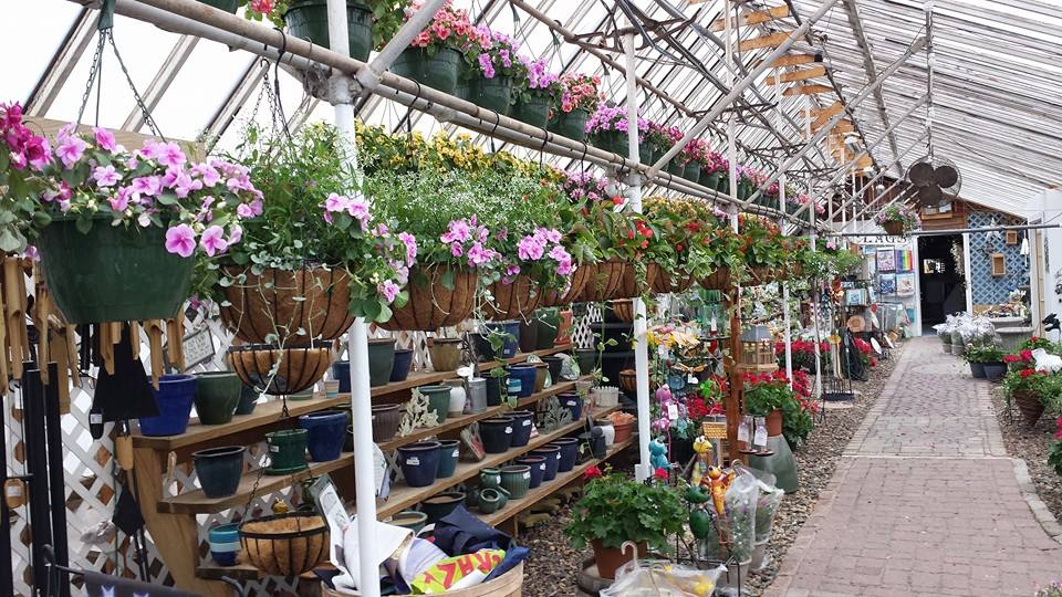 Stop By Ali S Nursery For All Kinds Of Plants Flowers And Shrubs