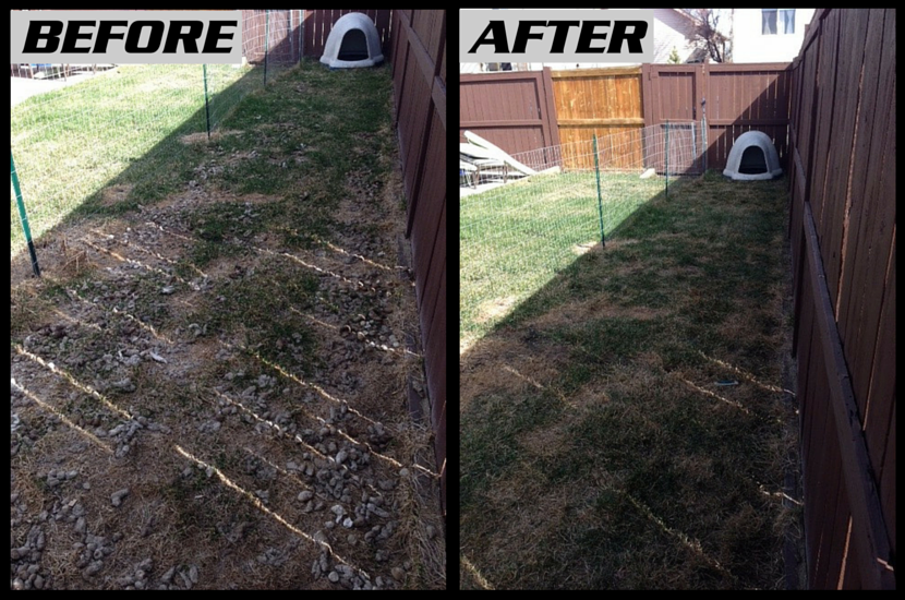 Before and After picture of a yard that had lots of dog poop in it. and was cleared by the Poooh Busters team in Calgary.