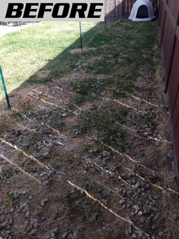 Yard that has lots of dog poop in it.