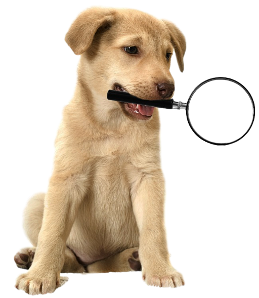 Golden Retriever puppy holding a magnifying glass in his mouth.