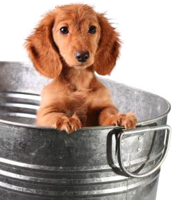 puppy in a bucket picture