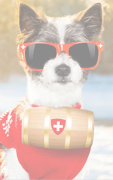 little dog with red sunglasses sitting in the snow