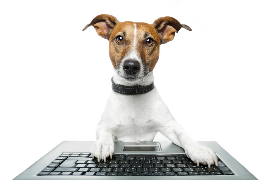 jack russell terrier with computer keyboard on white background